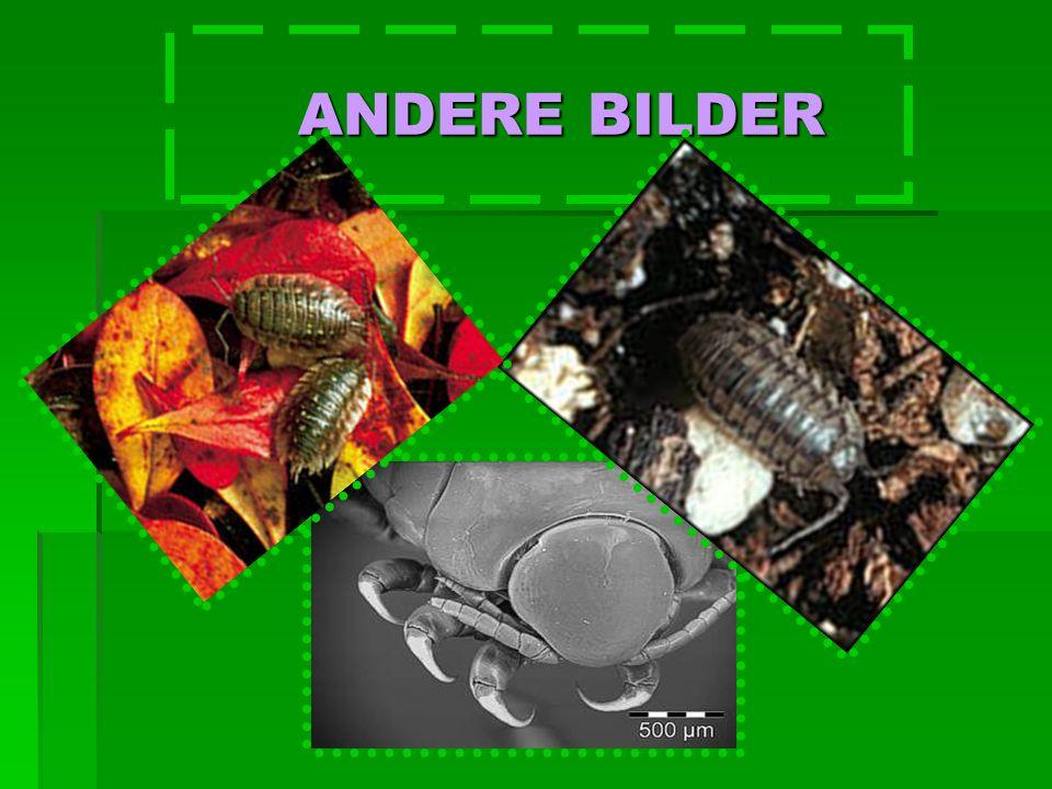 ANDERE BILDER