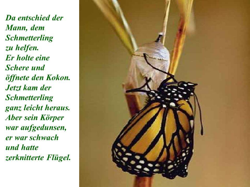 Da entschied der Mann, dem Schmetterling