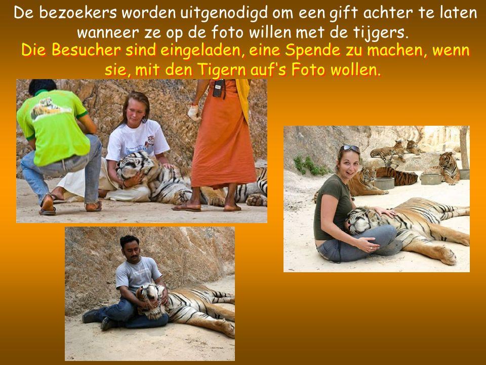 De bezoekers worden uitgenodigd om een gift achter te laten wanneer ze op de foto willen met de tijgers.