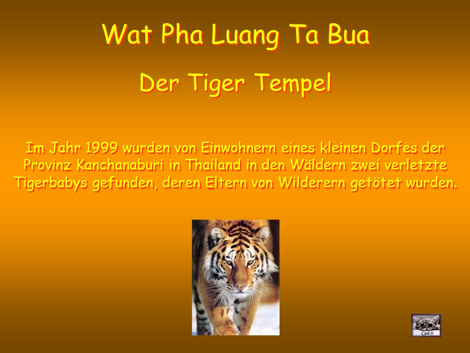 Wat Pha Luang Ta Bua Der Tiger Tempel