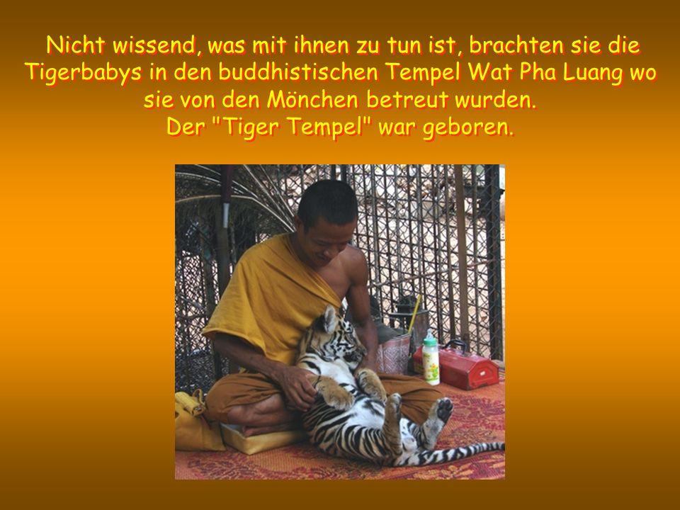 Der Tiger Tempel war geboren.