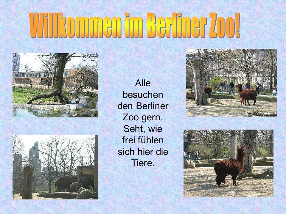 Willkommen im Berliner Zoo!