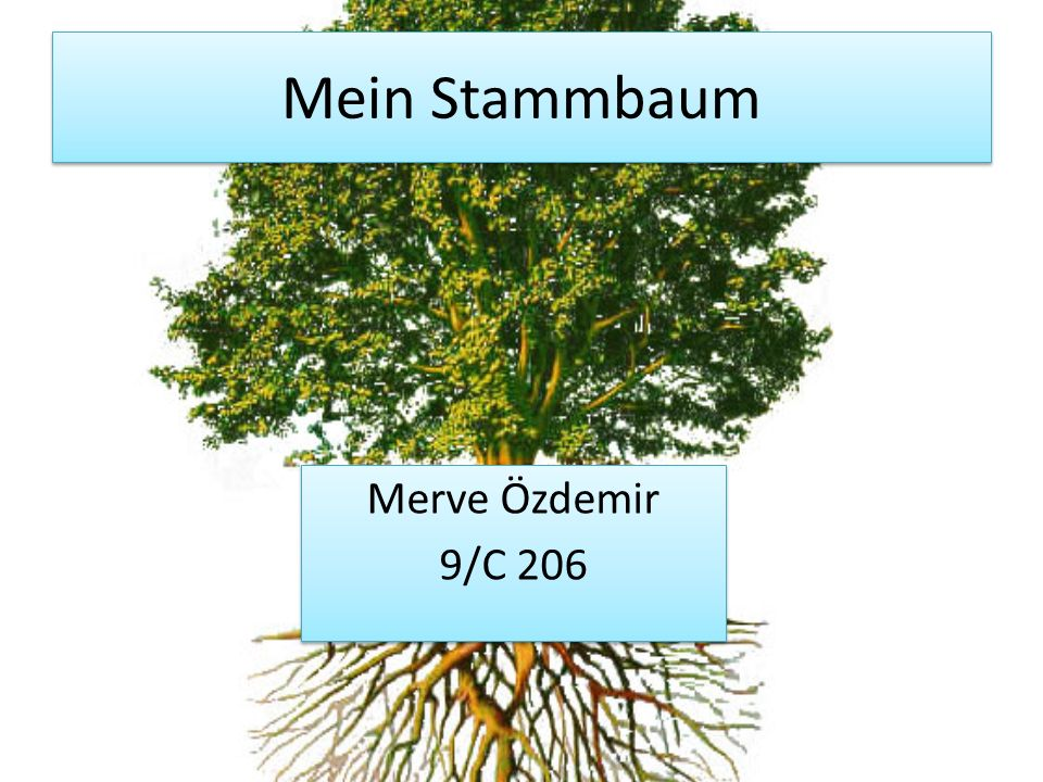 Mein Stammbaum Merve Özdemir 9/C 206