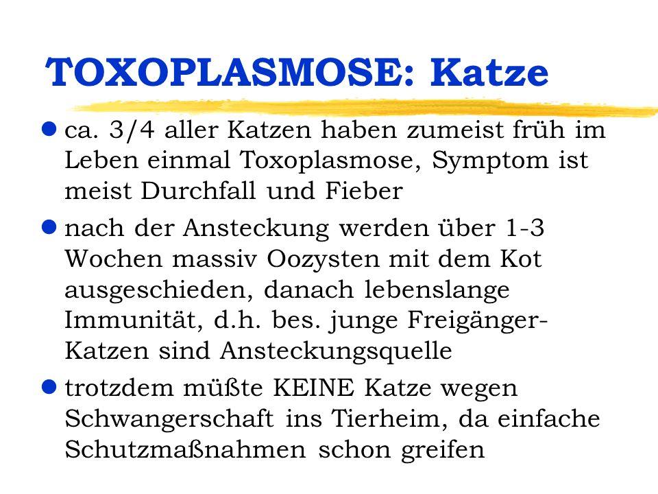 TOXOPLASMOSE: Katze ca. 3/4 aller Katzen haben zumeist früh im Leben einmal Toxoplasmose, Symptom ist meist Durchfall und Fieber.