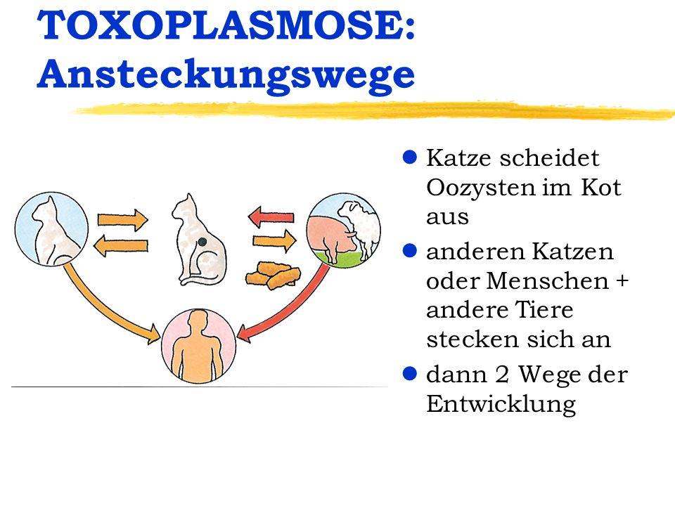 TOXOPLASMOSE: Ansteckungswege