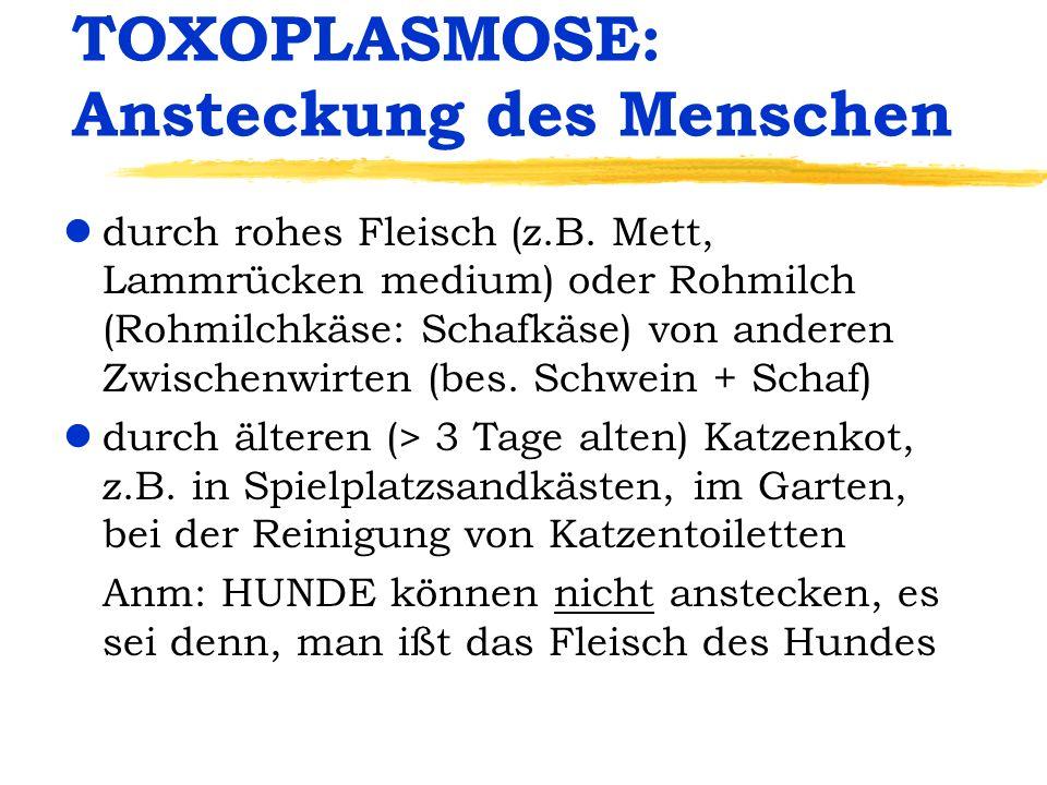 TOXOPLASMOSE: Ansteckung des Menschen