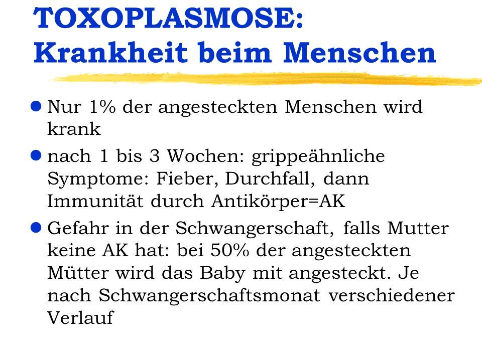 TOXOPLASMOSE: Krankheit beim Menschen