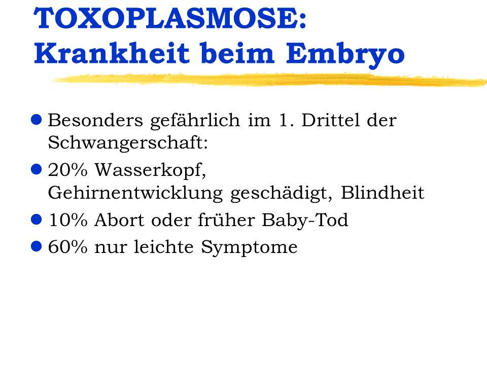 TOXOPLASMOSE: Krankheit beim Embryo