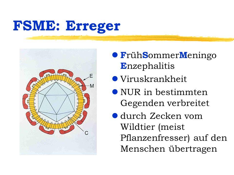 FSME: Erreger FrühSommerMeningo Enzephalitis Viruskrankheit