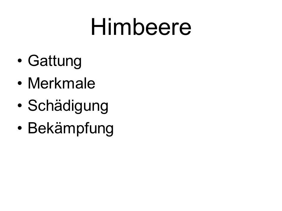 Himbeere Gattung Merkmale Schädigung Bekämpfung