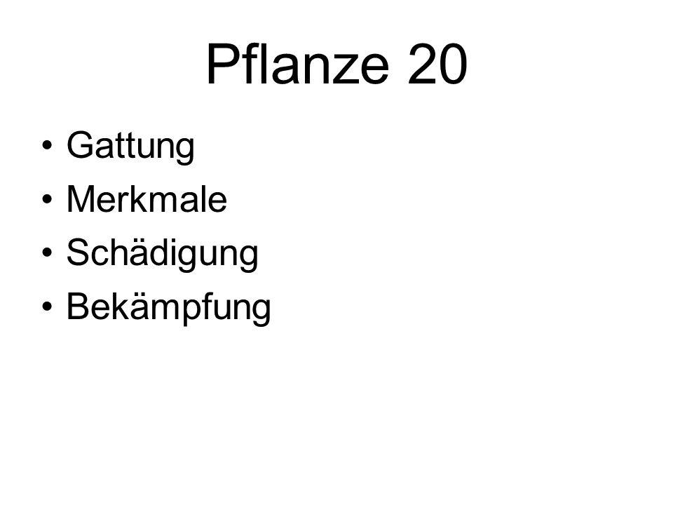 Pflanze 20 Gattung Merkmale Schädigung Bekämpfung