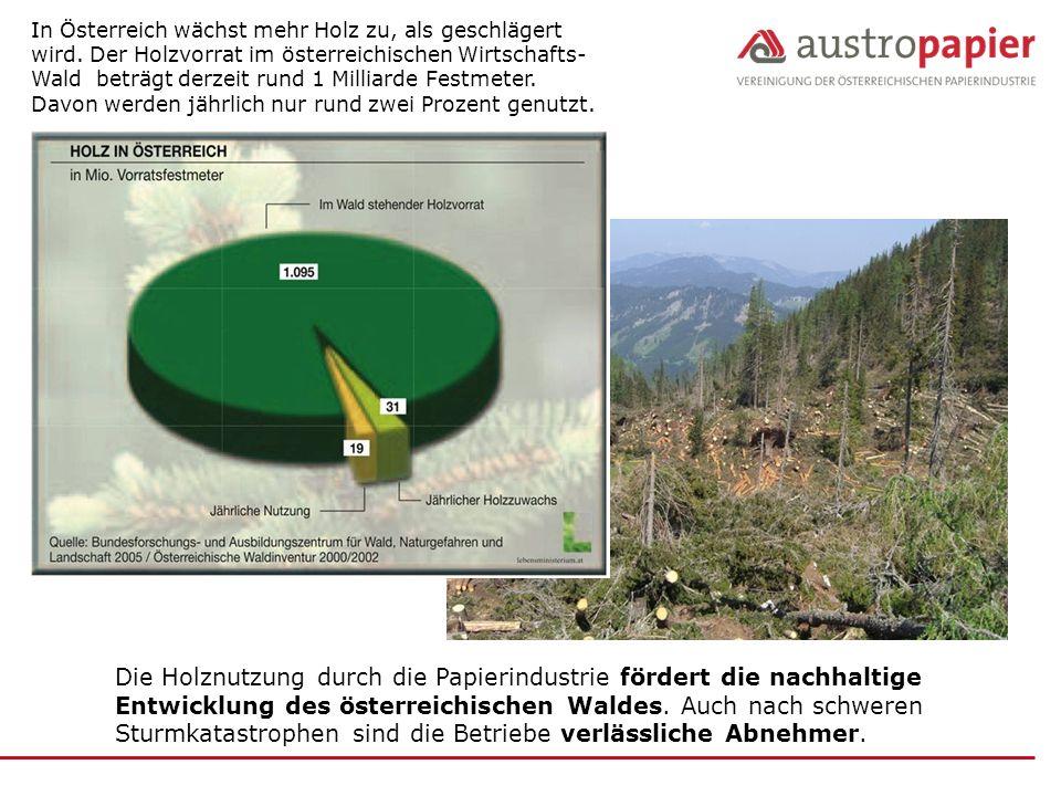 In Österreich wächst mehr Holz zu, als geschlägert