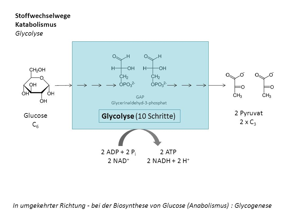 Glycolyse (10 Schritte) Stoffwechselwege Katabolismus Glycolyse