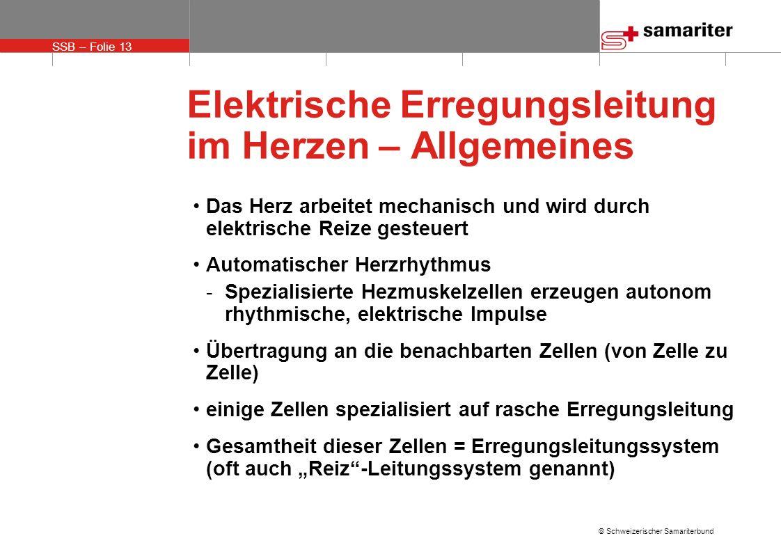 Elektrische Erregungsleitung im Herzen – Allgemeines