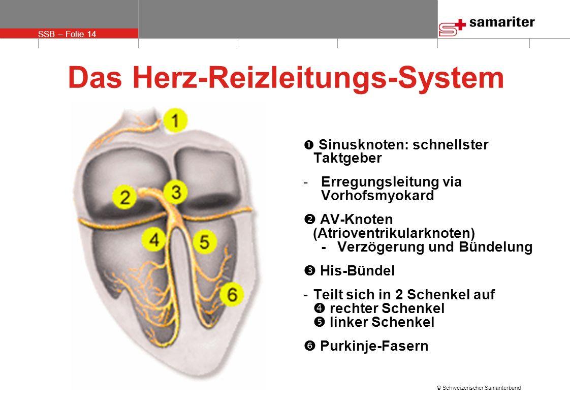 Das Herz-Reizleitungs-System