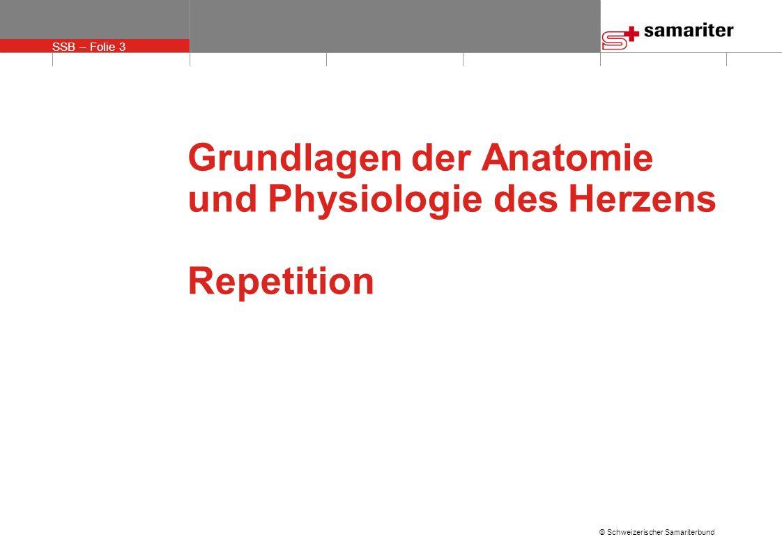 Grundlagen der Anatomie und Physiologie des Herzens Repetition