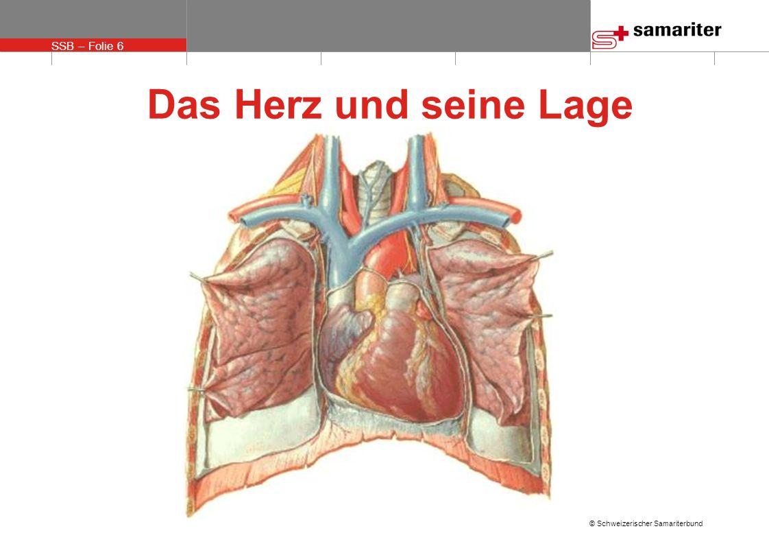 Wunderbar Anatomie Herz Lage Galerie - Menschliche Anatomie Bilder ...