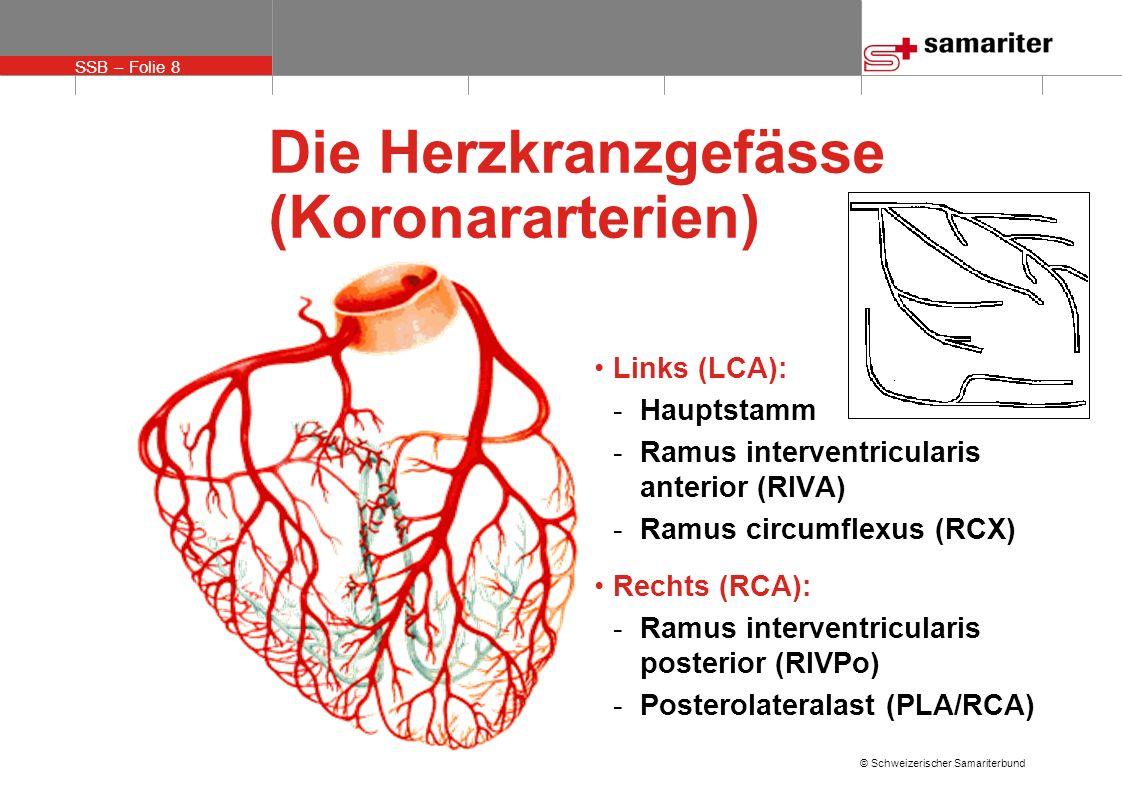 Die Herzkranzgefässe (Koronararterien)