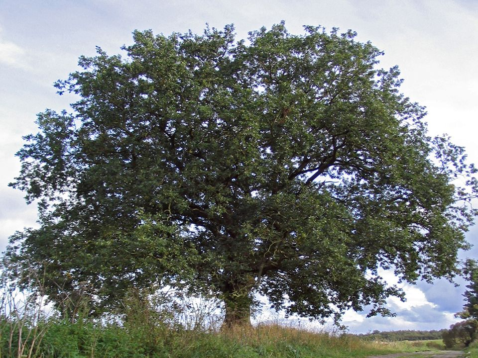 """""""Alt wie ein Baum möchte ich werden"""