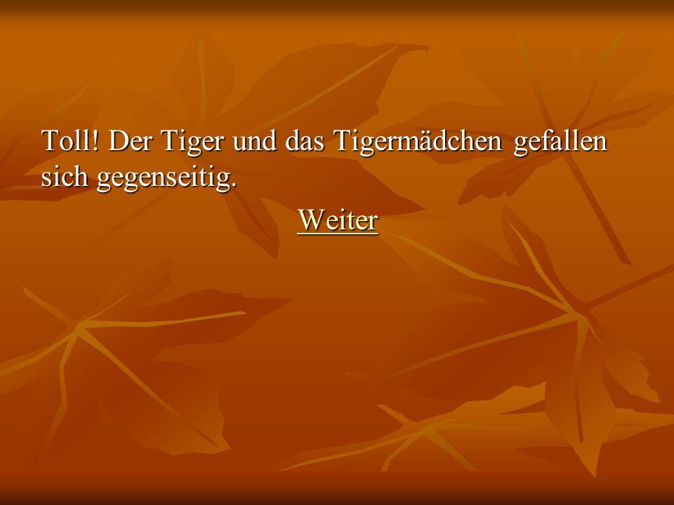 Toll! Der Tiger und das Tigermädchen gefallen sich gegenseitig.