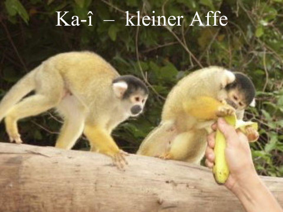 Ka-î – kleiner Affe