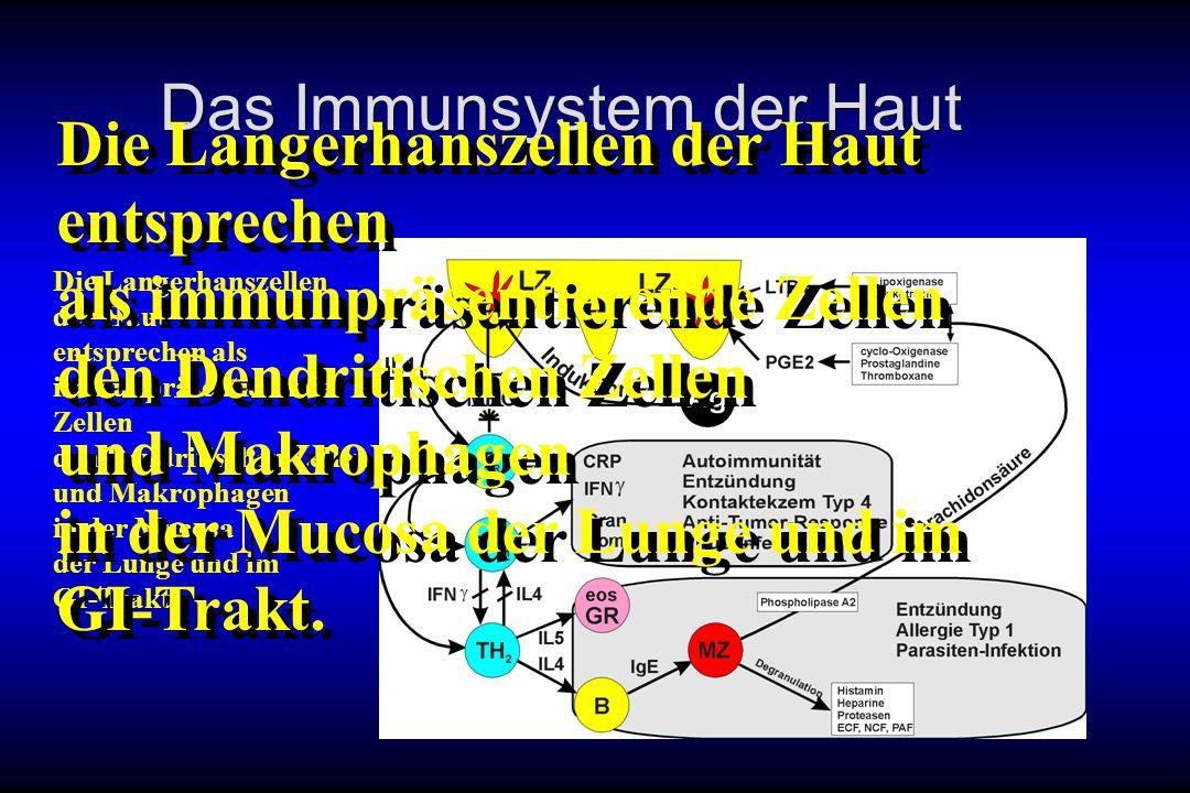 Das Immunsystem der Haut