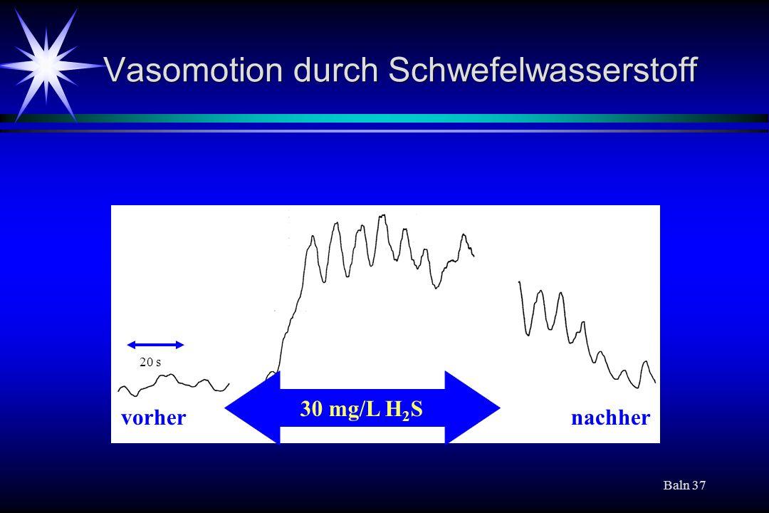 Vasomotion durch Schwefelwasserstoff
