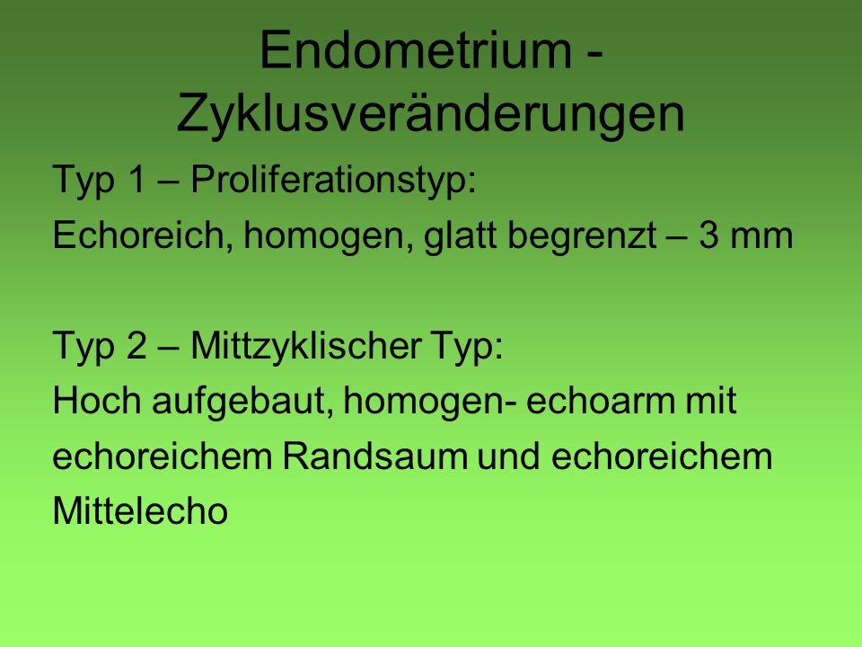 Endometrium -Zyklusveränderungen