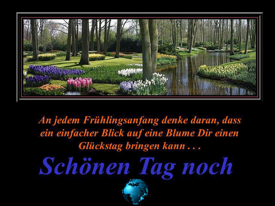 An jedem Frühlingsanfang denke daran, dass ein einfacher Blick auf eine Blume Dir einen Glückstag bringen kann . . .