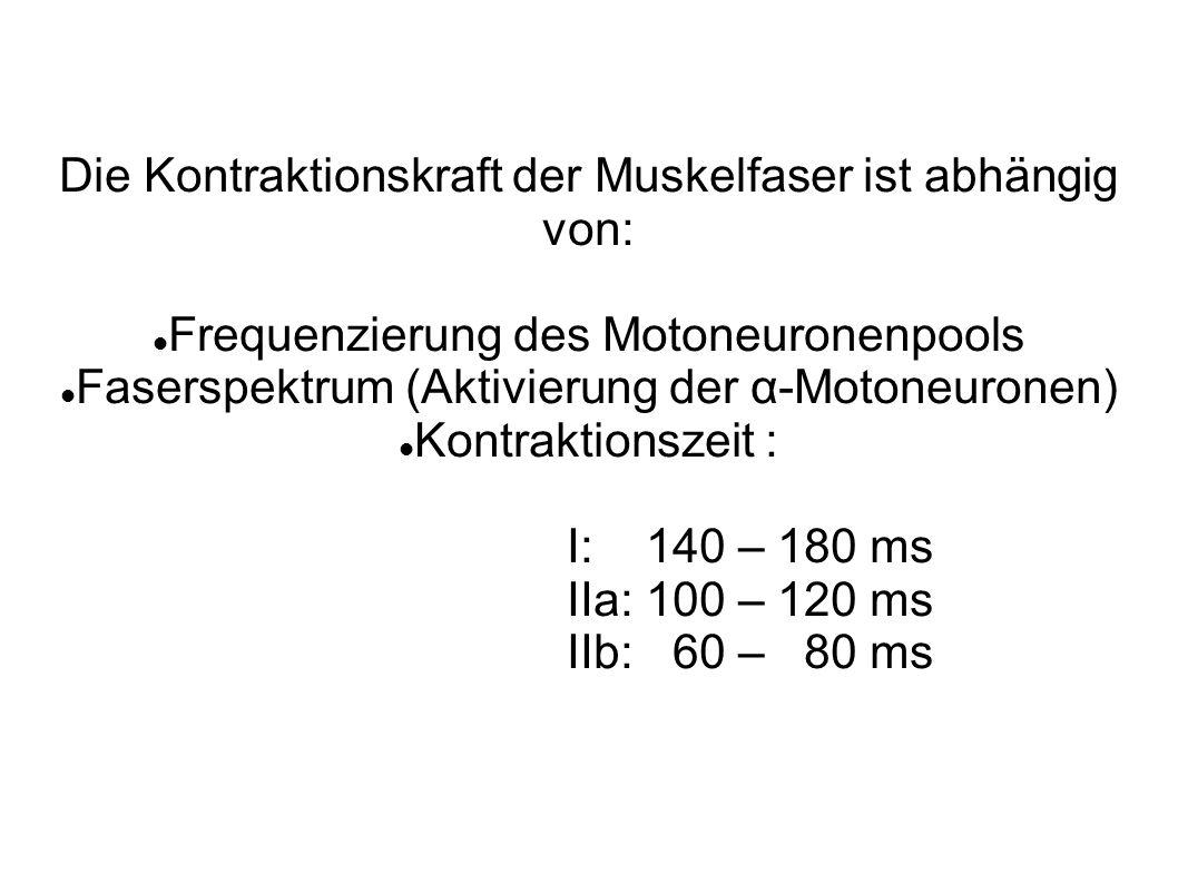 Die Kontraktionskraft der Muskelfaser ist abhängig von: