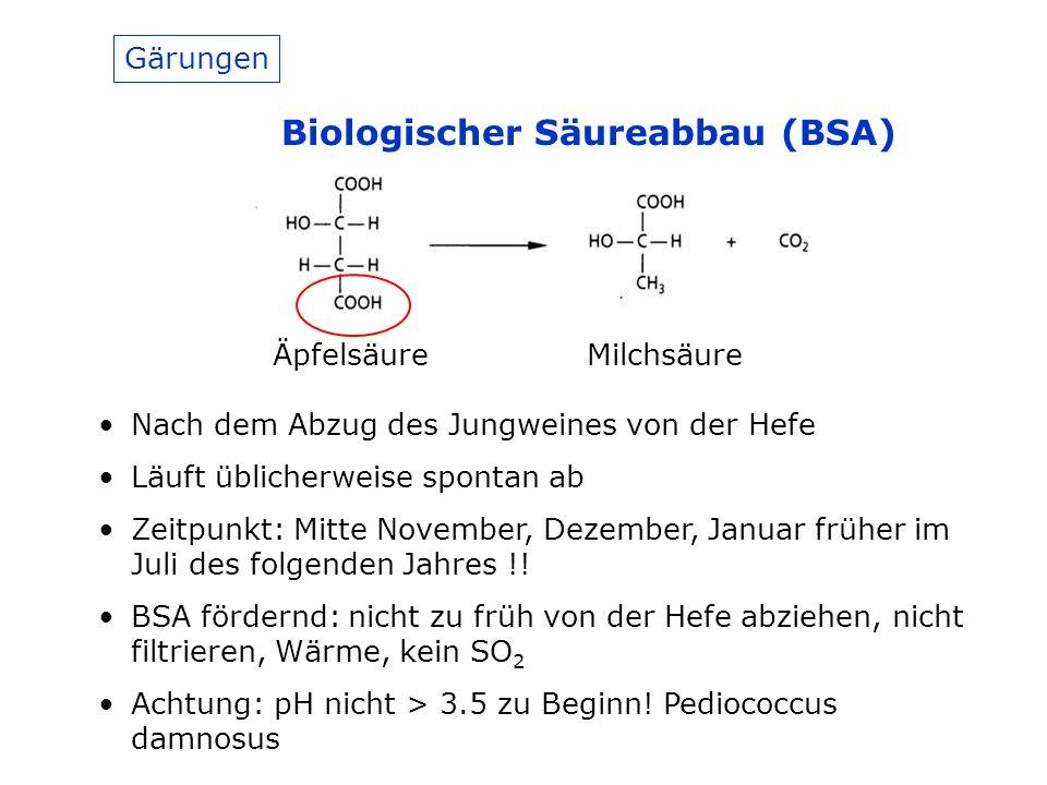 Biologischer Säureabbau (BSA)