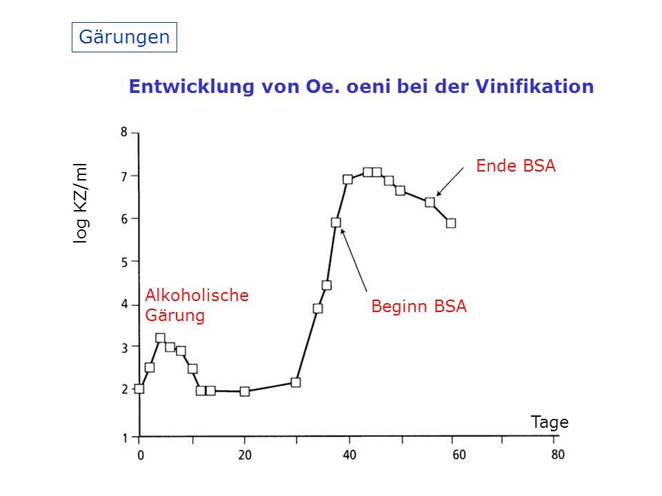 Entwicklung von Oe. oeni bei der Vinifikation