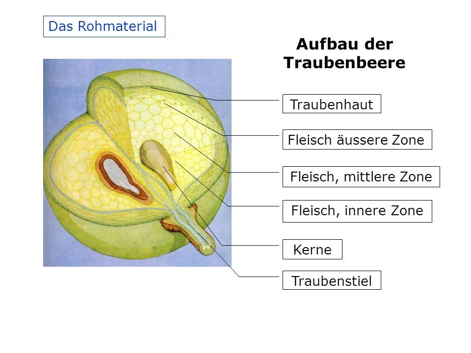 Aufbau der Traubenbeere