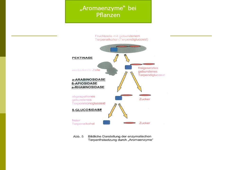 """""""Aromaenzyme bei Pflanzen"""