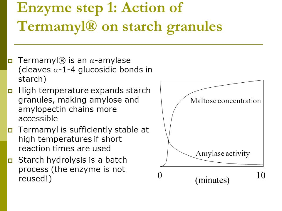 Enzyme step 1: Action of Termamyl® on starch granules