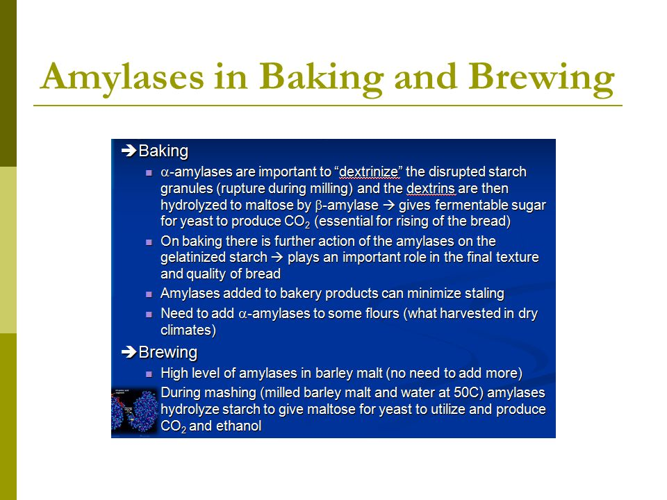 Amylases in Baking and Brewing