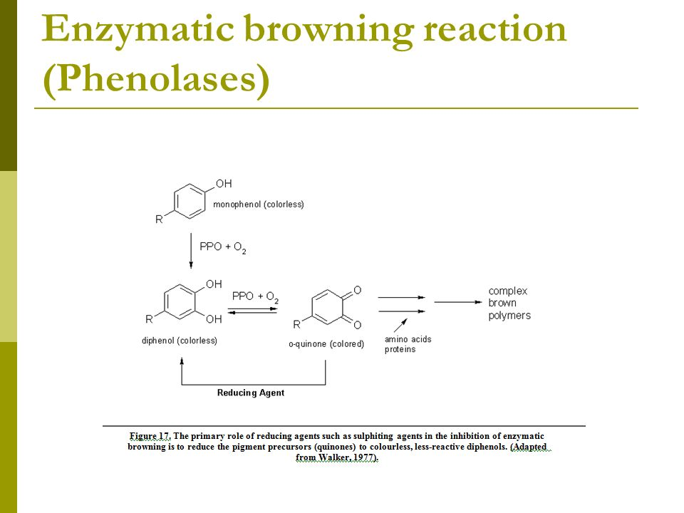 Enzymatic browning reaction (Phenolases)