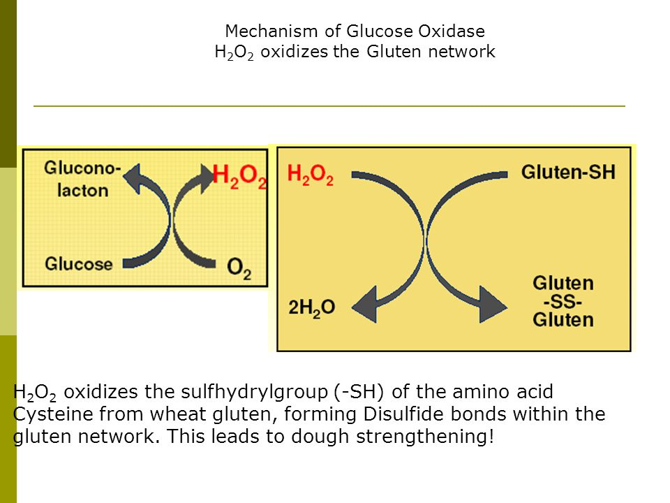Mechanism of Glucose Oxidase H2O2 oxidizes the Gluten network