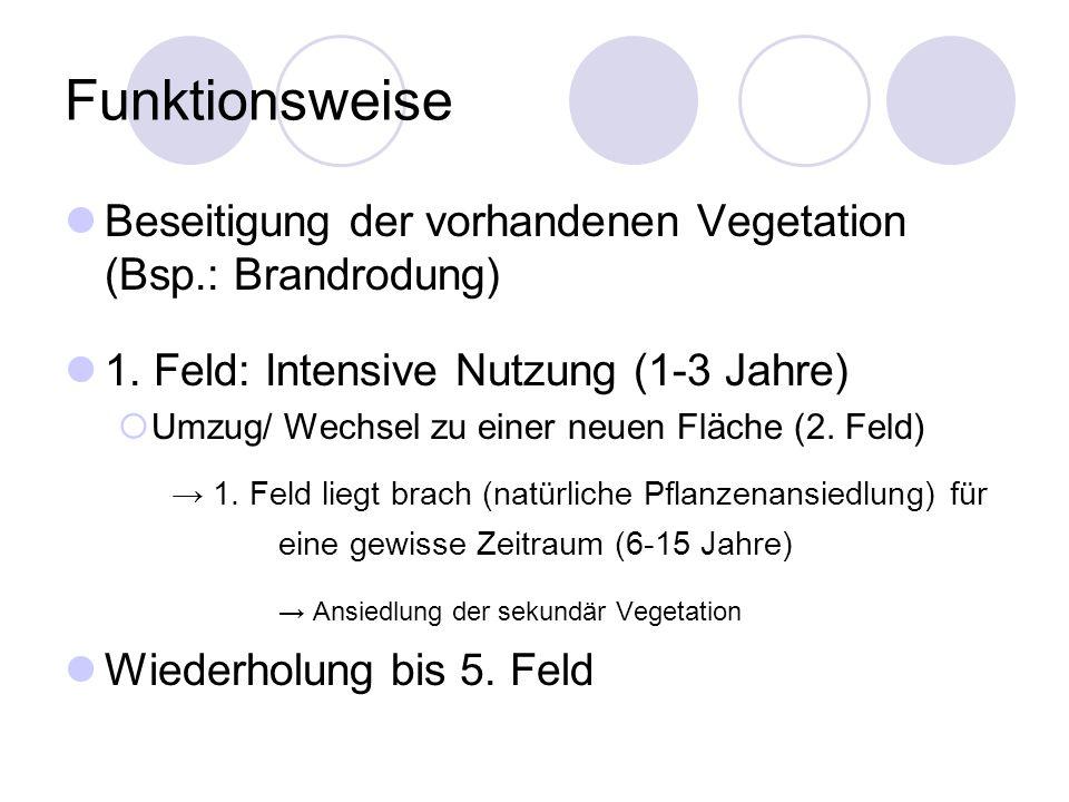 Funktionsweise Beseitigung der vorhandenen Vegetation (Bsp.: Brandrodung) 1. Feld: Intensive Nutzung (1-3 Jahre)