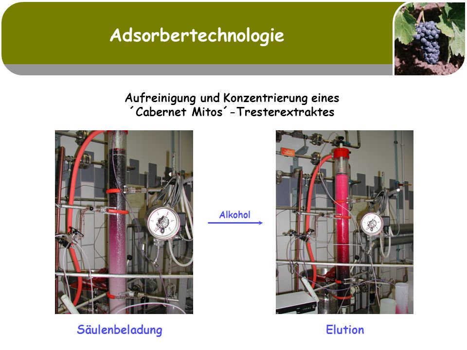 Adsorbertechnologie Aufreinigung und Konzentrierung eines ´Cabernet Mitos´-Tresterextraktes.
