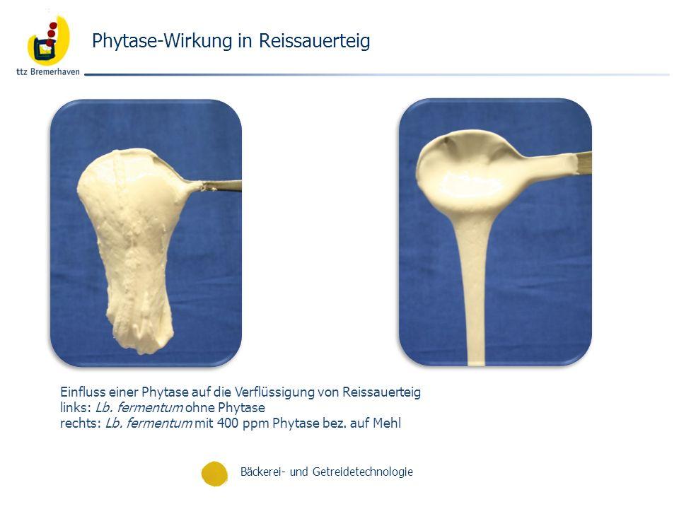 Phytase-Wirkung in Reissauerteig