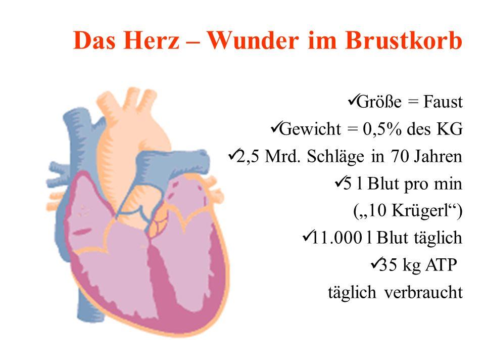 Das Herz – Wunder im Brustkorb