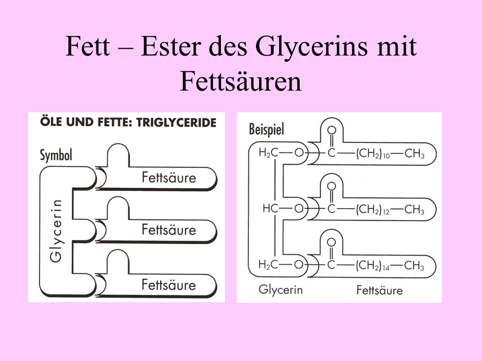 Fett – Ester des Glycerins mit Fettsäuren