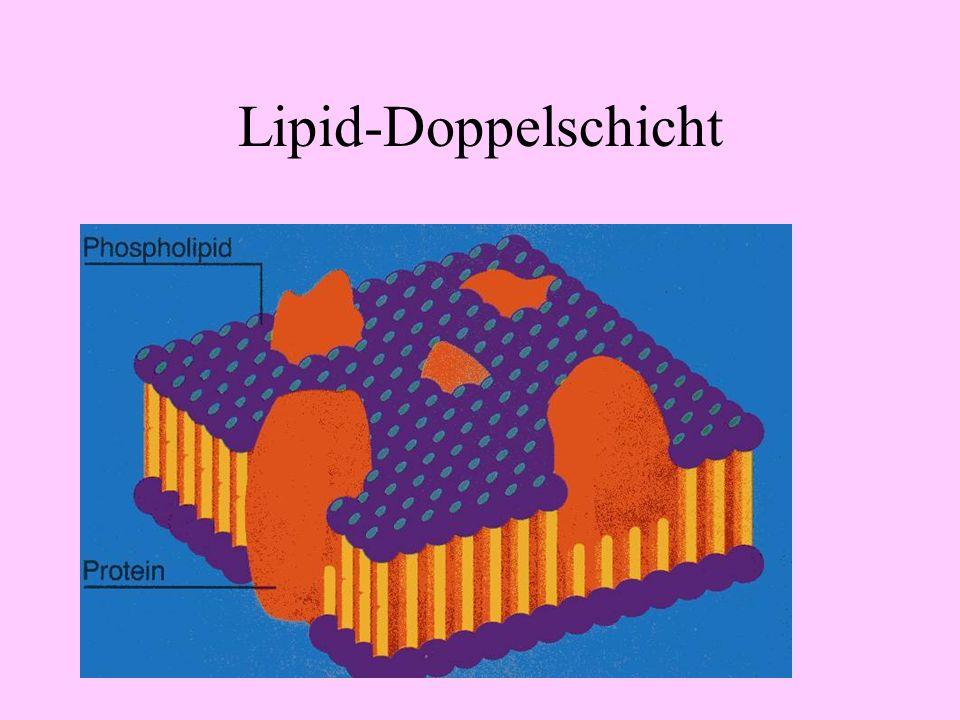 Lipid-Doppelschicht