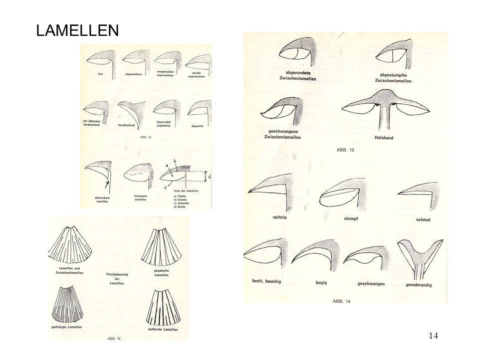 LAMELLEN