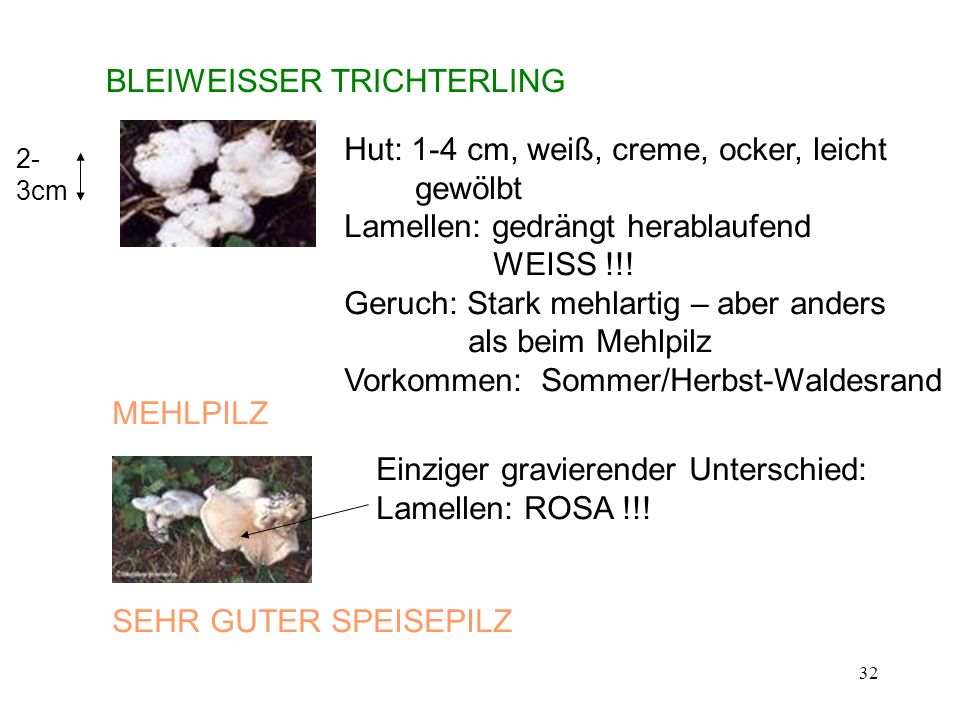 BLEIWEISSER TRICHTERLING