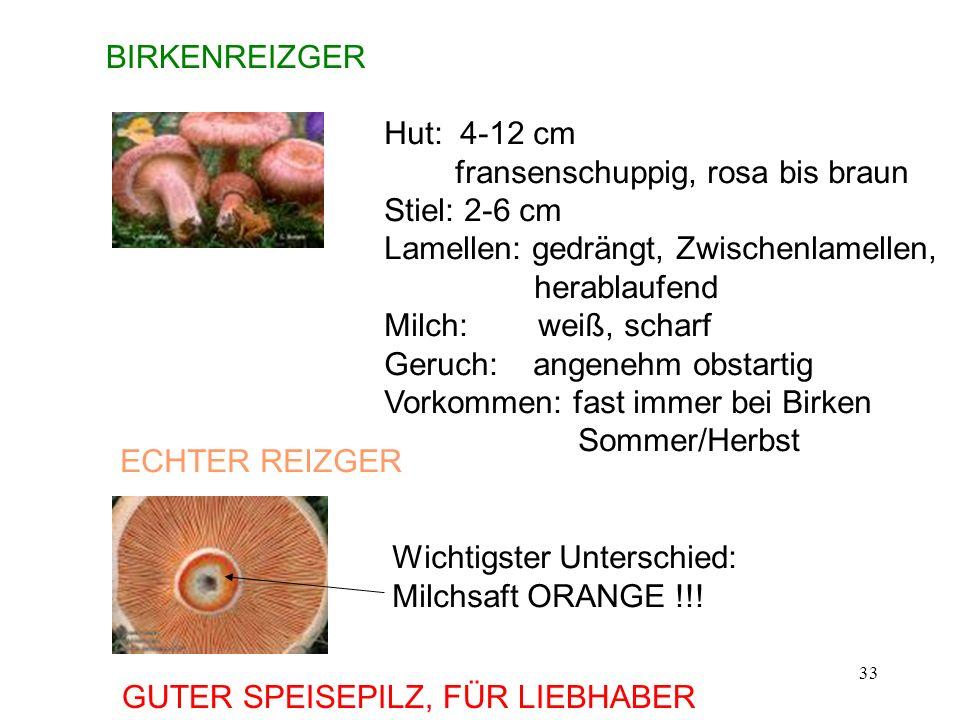 BIRKENREIZGER Hut: 4-12 cm. fransenschuppig, rosa bis braun. Stiel: 2-6 cm. Lamellen: gedrängt, Zwischenlamellen,