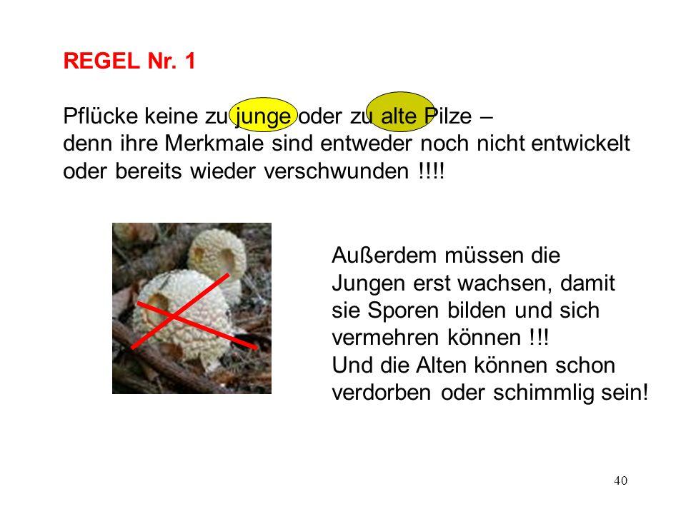 REGEL Nr. 1 Pflücke keine zu junge oder zu alte Pilze – denn ihre Merkmale sind entweder noch nicht entwickelt.