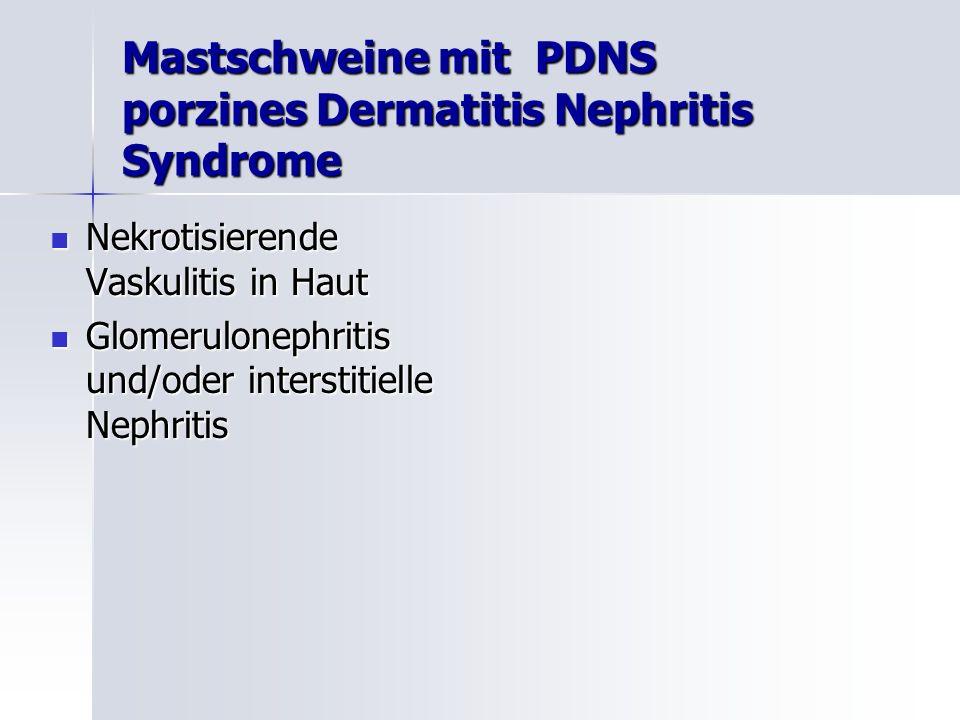Mastschweine mit PDNS porzines Dermatitis Nephritis Syndrome