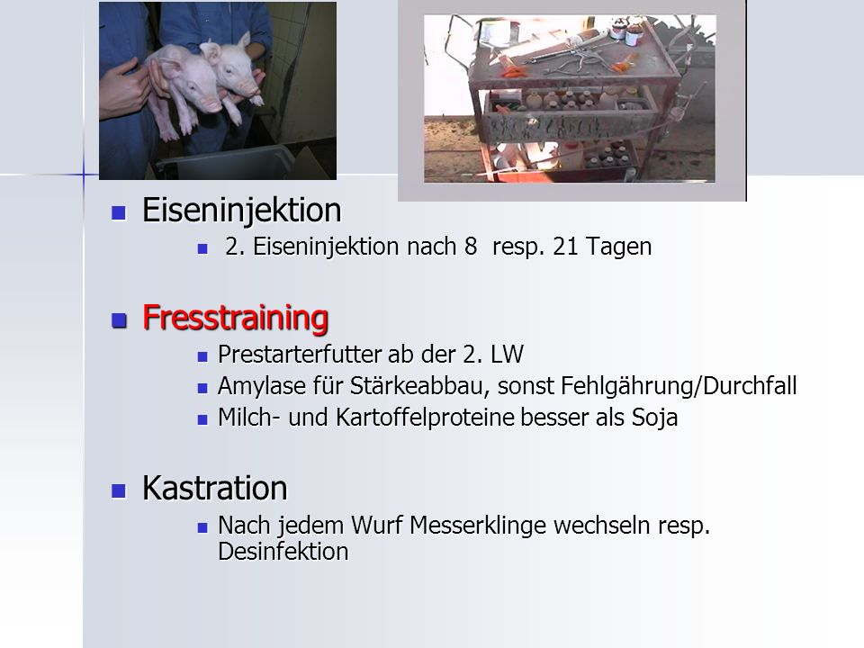 Eiseninjektion Fresstraining Kastration